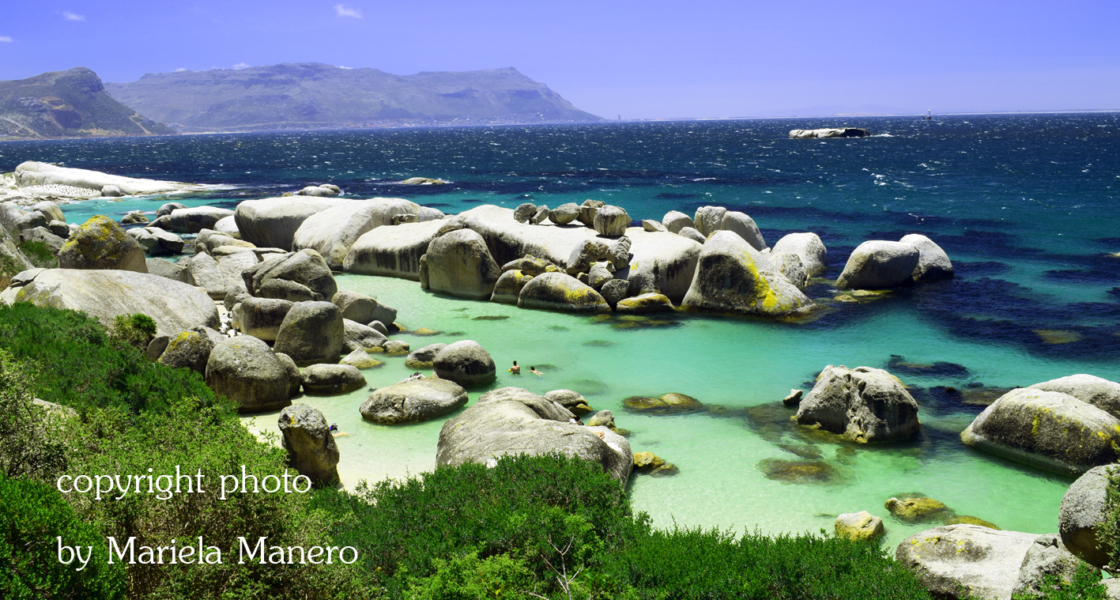 Boulders Beach the penguin in Simon's Town SouthAfrica
